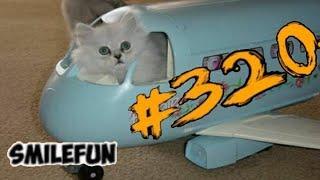 КОШКИ 2020 Смешные Коты 2020 Приколы С Котами про Котов Funny Cats