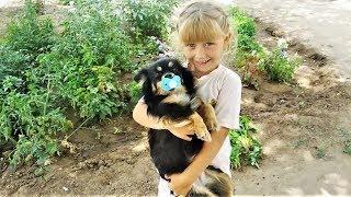 Приколы Животные 2018 Май #230 Смешные Собаки и Кошки