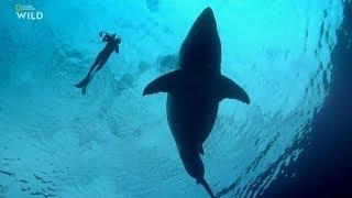 Самая большая в мире белая акула (2019). Документальный фильм