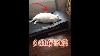 Приколы с котами и смешная озвучка животных – Полный угар от PSO