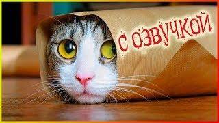 Приколы с котами с ОЗВУЧКОЙ! – Смешные коты и кошки! РЖАКА ДО СЛЁЗ 2019!– PSO