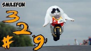КОТЫ 2020 Смешные Кошки Приколы С Котами и Кошками 329 Funny Cats