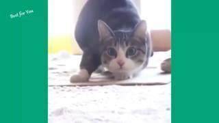 FUNNY CATS SING NEW YEARS Кошки смешно поют СМЕШНЫЕ ЗАБАВНЫЕ КОШКИ