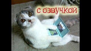 Приколы с котами – У МОЕГО КОТА КОТОБУК! Смешная озвучка животных! Я РЖАЛ ПОЛЧАСА! – PSO