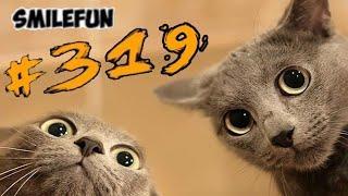 КОТЫ СМЕШНЫЕ Кошки и Котики ПРИКОЛЫ С КОТАМИ 2020 Funny Cats