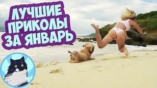 ЛУЧШИЕ ПРИКОЛЫ За весь Январь 2019 Лучшие смешные видео Приколы