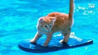 СМЕШНЫЕ ВИДЕО ПРО ЖИВОТНЫХ Приколы с Котами Смешные коты и кошки 2018