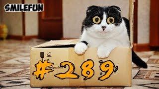 КОШКИ 2019 ПРИКОЛЫ С КОТАМИ Смешные котики и кошки Funny Cats