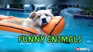 ЗАБАВНЫЕ ЖИВОТНЫЕ КОТЫ и СОБАКИ Самое Смешное видео о животных  Попробуй не смеяться ржачные приколы