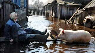 СЕЛЬСКИЕ ДЕРЕВЕНСКИЕ ПРИКОЛЫ (Подборка) Видео Смешные видео Приколы Юмор