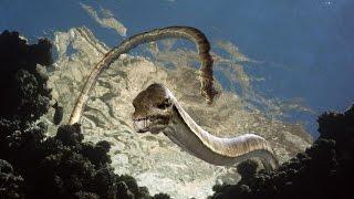 Морские динозавры. Документальные фильмы. National Geographic Channel TV