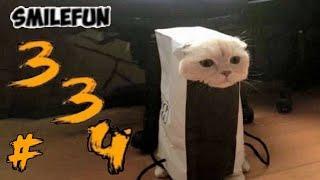 КОШКИ 2020 Смешные Кошки Приколы С Кошками и Котами Funny Cats