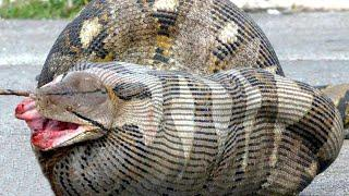 10 Самых опасных животных Австралии