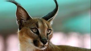 САМЫЕ беспощадные хищники АФРИКИ! Документальные фильмы, фильмы о хищниках