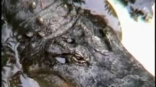 Запрещенное в кинотеатрах документальный фильм ЗЕМЛЯНЕ. Как убивают животных !