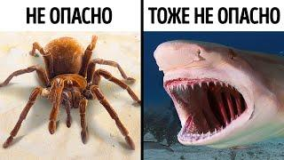 14 страшных, но не опасных животных