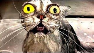 Приколы с котами и кошками | Приколы с животными. Приколы лучшие приколы 2017