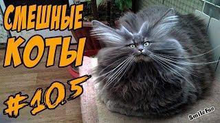 КОТЫ ПРИКОЛЫ С КОШКАМИ 2018 СМЕШНЫЕ КОШКИ И КОТЫ 2018 Funny Cats